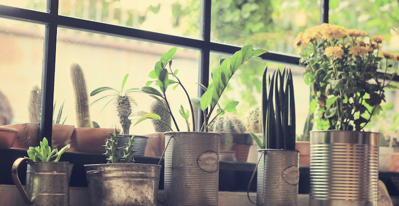 Plants in home